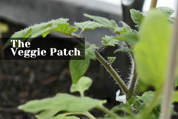 the-veggie-patch_2